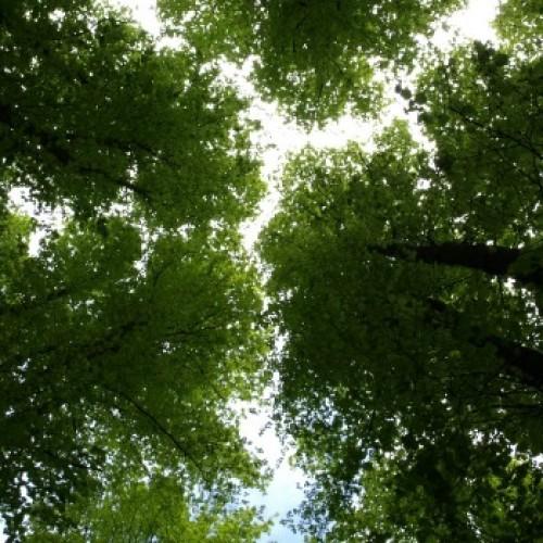 Kto musi opłacać podatek leśny?