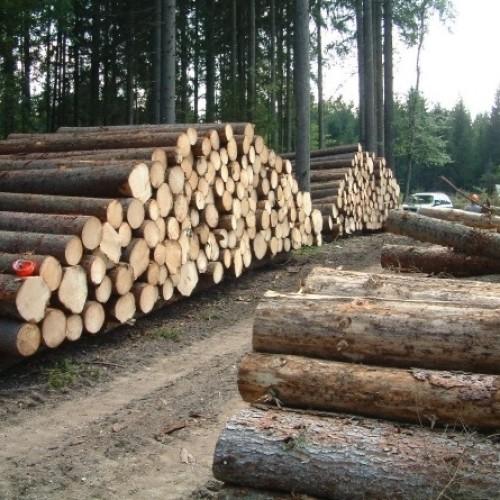 Kto zobowiązany jest do płacenia podatku leśnego?